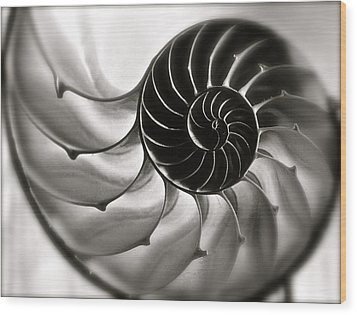 Nautilus Wood Print by Kim Pippinger