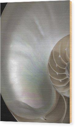 Wood Print featuring the photograph Nautilus Shell 3 by John Hix