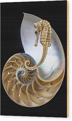 Nautilus With Seahorse Wood Print by Garry Gay