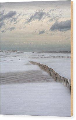 Nemo Wood Print by JC Findley