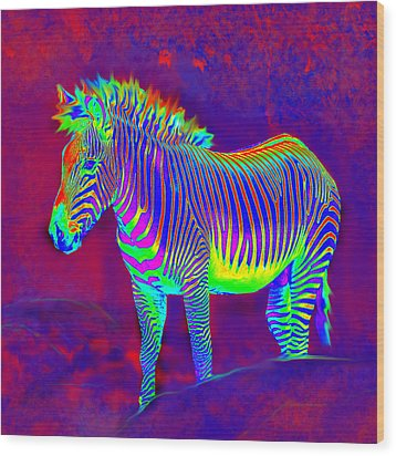 Neon Zebra Wood Print by Jane Schnetlage