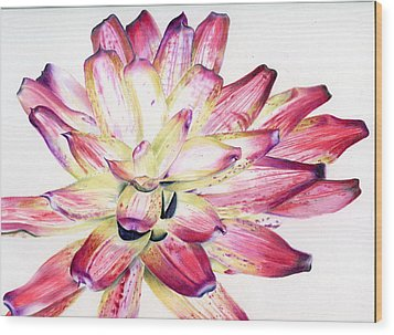 Neoregelia Picasso Wood Print by Penrith Goff