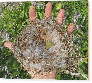 A Nest In Hand Wood Print by Bruce Carpenter