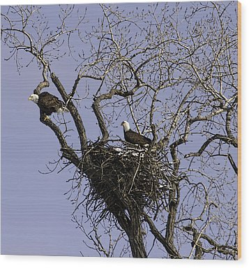 Nesting Pair Of American Bald Eagles 1 Wood Print by Thomas Young