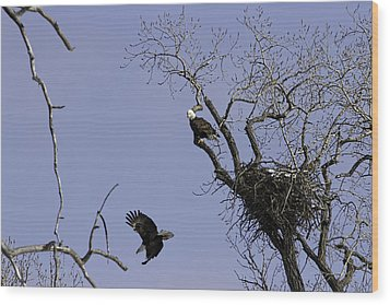 Nesting Pair Of American Bald Eagles 2 Wood Print by Thomas Young