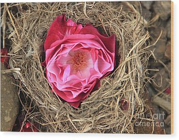 Nesting Rose Wood Print by Jeanette French