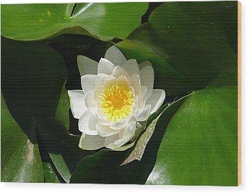 Nestled-in-leaves Wood Print
