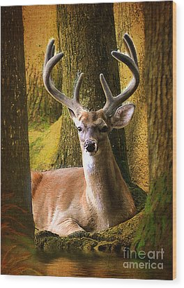 Wood Print featuring the photograph Nestled In The Woods by Kathy Baccari