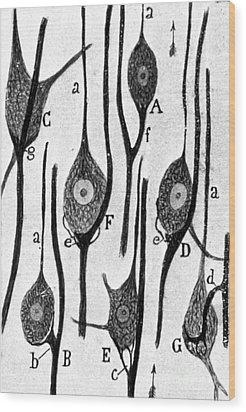 Neural Connections Illustrated Wood Print by Science Source
