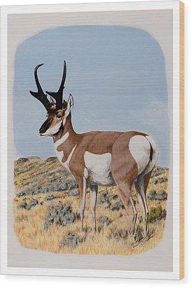 Nevada Pronghorn  Wood Print