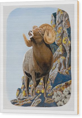 Nevada Rocky Mountain Bighorn Wood Print