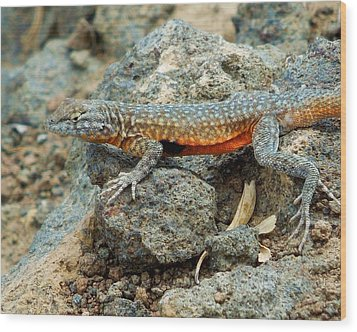 Wood Print featuring the photograph Nevada Side-blotched Lizard by Heidi Manly