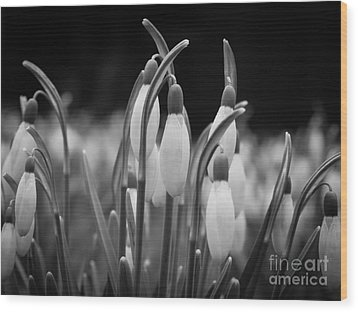 New Beginnings And Hope Wood Print by Inez Wijker Photography