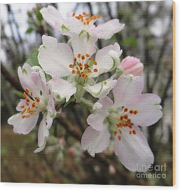 Wood Print featuring the photograph New Beginnings by Ecinja Art Works