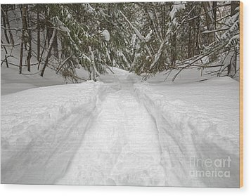 New England Snow-covered Forest - New Hampshire Usa Wood Print by Erin Paul Donovan