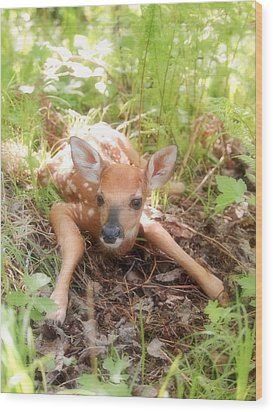 New Fawn In The Forest Wood Print by Angie Rea