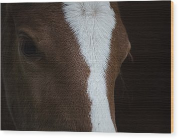 New Filly Wood Print by Kelly Kitchens