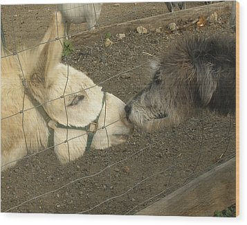 New Friends Wood Print by Susan Elizabeth Dalton
