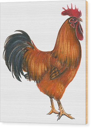 New Hampshire Rooster  Wood Print by Anonymous
