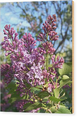 Purple Lilac Wood Print