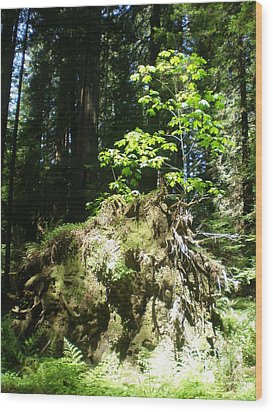 New Life For Old Stump Wood Print by Suzanne McKay