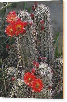 New Mexico Cactus Wood Print by Kurt Van Wagner
