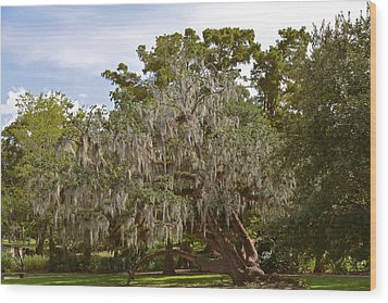 New Orleans Spanish Moss Wood Print by Christine Till