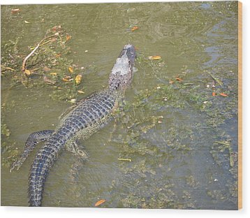 New Orleans - Swamp Boat Ride - 121258 Wood Print by DC Photographer