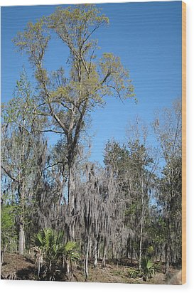 New Orleans - Swamp Boat Ride - 121265 Wood Print by DC Photographer