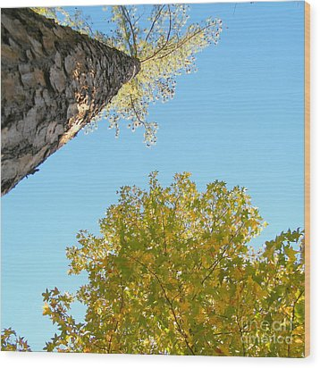 New Perspective On Autumn Leaves Wood Print by Cheryl Hardt Art