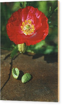 New Red Poppy Wood Print