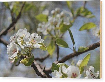 New Spring Beginnings Wood Print by Brittany Danko