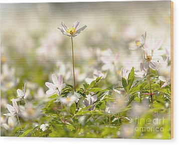 Wood Print featuring the photograph New Time Springtime by Rose-Maries Pictures
