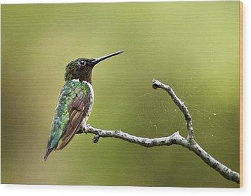 New York Hummingbird Wood Print by Christina Rollo