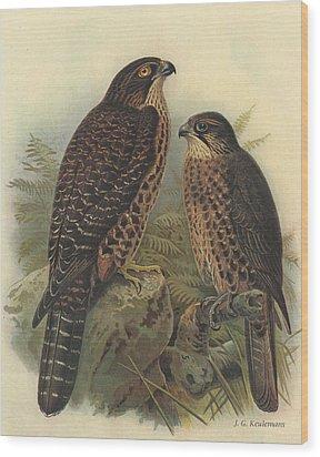 New Zealand Falcon Wood Print by Rob Dreyer