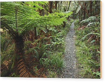 New Zealand Forest Wood Print by Les Cunliffe
