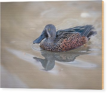 Wood Print featuring the photograph New Zealand Shoveler by Tyson and Kathy Smith