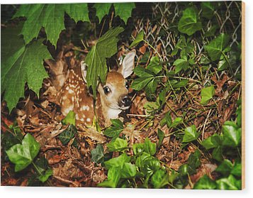 Wood Print featuring the photograph Newborn Fawn  by Eleanor Abramson