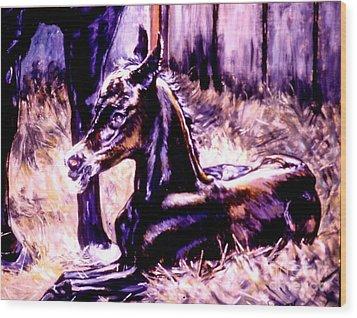 Newborn Foal Wood Print