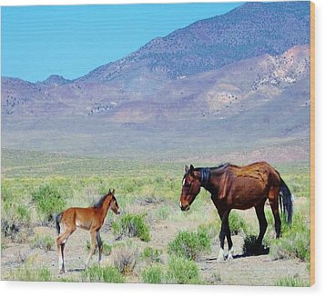 Wood Print featuring the photograph Newborn Mustang Foal by Marilyn Diaz