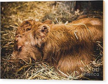 Newborn Nap Wood Print by Sue OConnor