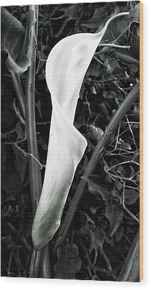 Newborn Wood Print by Ron Regalado