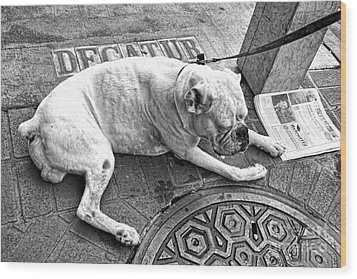 Newsworthy Dog In French Quarter Black And White Wood Print by Kathleen K Parker