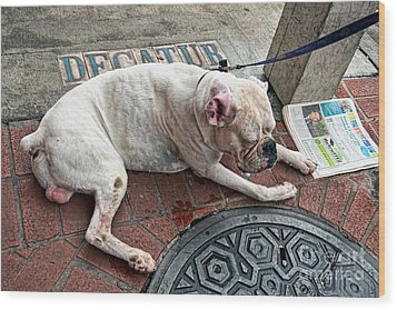 Newsworthy Dog In French Quarter Wood Print by Kathleen K Parker