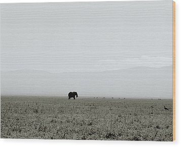 Ngorongoro Crater Wood Print by Shaun Higson