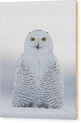 Nh Seacoast Snowy Owl  Wood Print by John Vose
