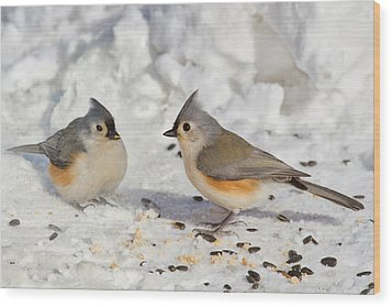 Nice Pair Of Titmice Wood Print