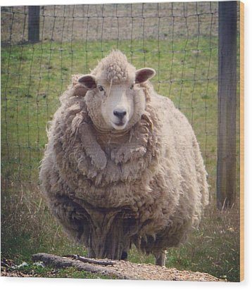 Wood Print featuring the photograph Nice To Meet Ewe by Penni D'Aulerio