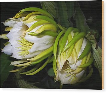 Night Blooming Cereus 31 Wood Print
