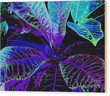 Night Falls On The Croton Wood Print by Ann Johndro-Collins
